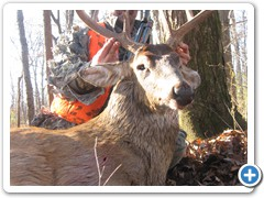 monster buck 2009 028